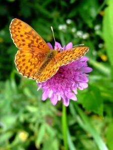 Somatopathie - Papillon